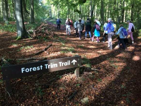 Forest Trim Trail