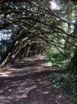 Yew Tree Walk 4
