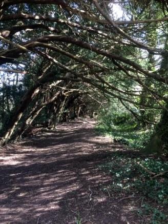 Yew Tree Walk 4