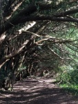 Yew Tree Walk 5
