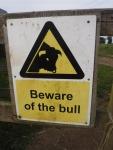 Beware The Bull
