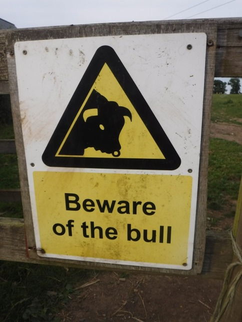 Fortunately no bulls in sight!