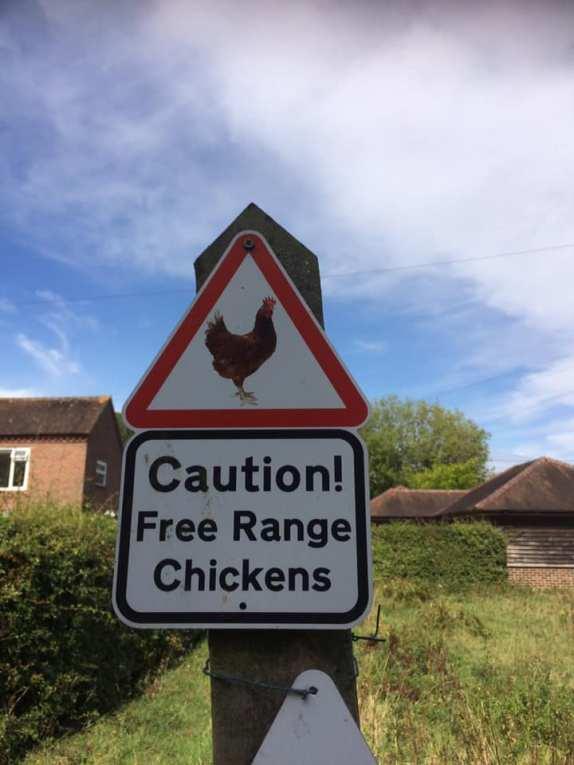 Caution Chickens